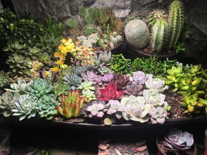 Succulents and cuttings available for Sale in Ann Arbor, MI