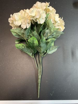13 Cream Hydrangea Bushes for Sale in Nashville, TN