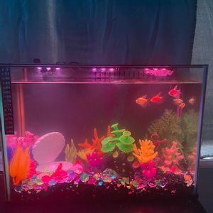 Fish Tank With Fish for Sale in Edmond, OK