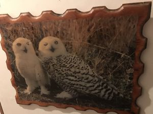 Owl picture for Sale in Tulalip, WA