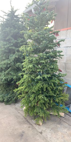 Christmas trees 7- 15ft tall for Sale in Windsor Hills, CA