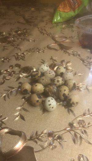 Quail eggs for 1.00 each for Sale in Santa Maria, CA