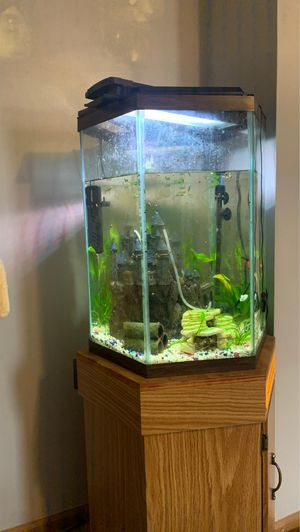 Fish tank complete set up **OBO** for Sale in Naperville, IL