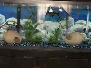 55 gallon fish tank with stand for Sale in Endicott, NY