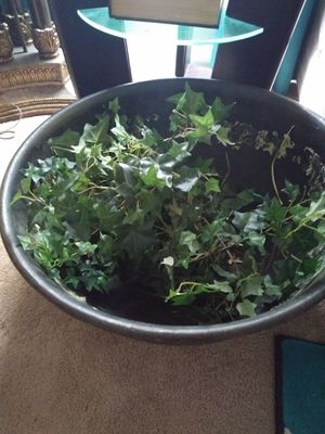 Big plant bowl for Sale in Gibsonton, FL
