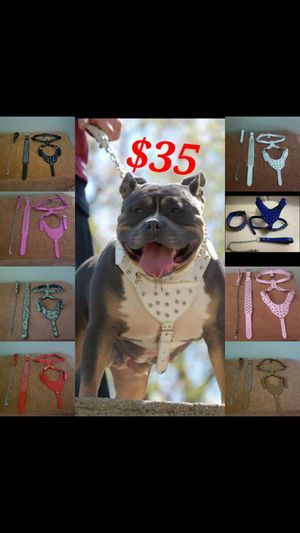Dog Sets, Spike Leather for Sale in Tolleson, AZ