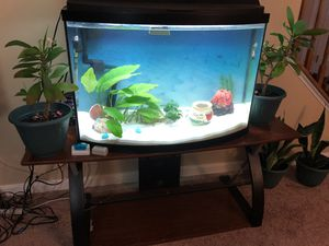 Exotic bow front aquarium for Sale in Woodbridge, VA