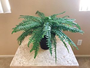 FAKE PLANT for Sale in Henderson, NV