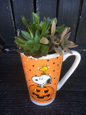 Plantas del sol for Sale in Fullerton, CA