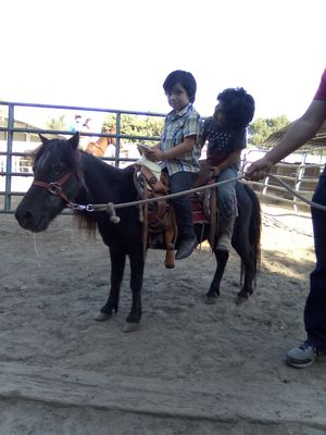 Pony para fiestas- for Party's $50 hr for Sale in Pico Rivera, CA