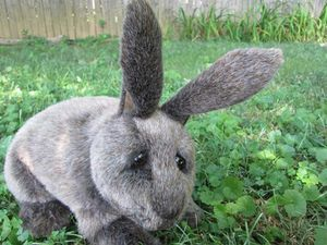 Bunny plush stuffed doll for Sale in Silver Spring, MD