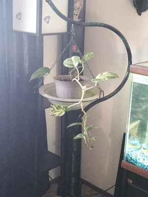 Plant hanging stand for Sale in Wichita, KS