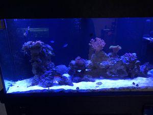125 gallon salt water fish tank for Sale in Orlando, FL