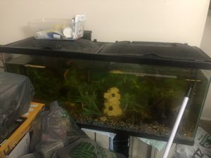 Selling my fish with tanks, one 50 gallon and one 30 gallon for Sale in Kent, OH