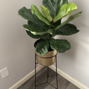 House Plant With New Planter !!! for Sale in Vancouver, WA