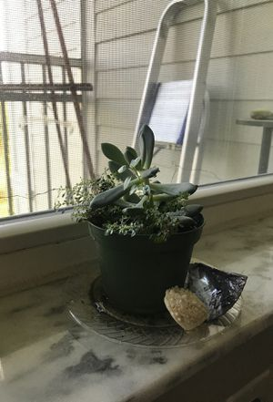 Cute Window Mini Succulent Garden Plant for Sale in St. Petersburg, FL