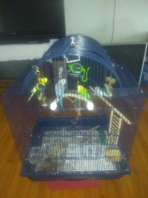 4 PARAKEETS WITH CAGE, TOYS AND ACCESSORIES !!! for Sale in Melrose Park, IL