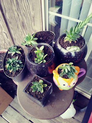 Plants for Sale in West Jordan, UT