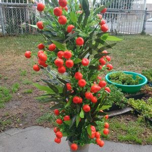 36 INCH ARTIFICIAL BAMBOO PLANT W/FRUIT for Sale in Los Angeles, CA