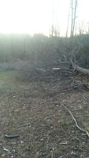 Fire wood for Sale in Pickens, SC
