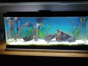 25 Gallon Fish tank for Sale in Canyon Country, CA
