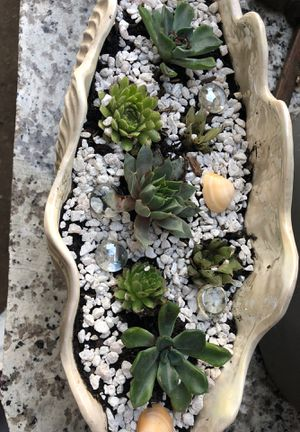 Succulent arrangement in ceramic seashell for Sale in Stockton, CA