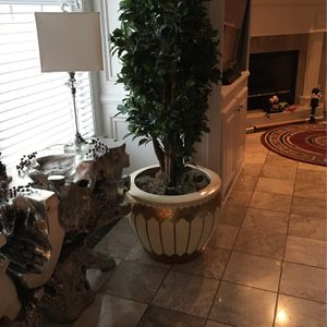 7 Foot Plant for Sale in Franklin, TN