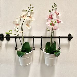 Orchid Display for Sale in Tamarac, FL