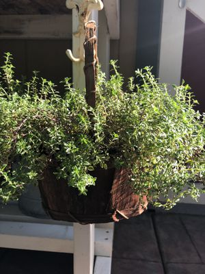 Planter basket of tyme for Sale in Vancouver, WA
