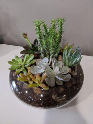 Live succulent arrangement for Sale in Annandale, VA
