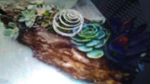 Succulent arrangement log for Sale in Stockton, CA