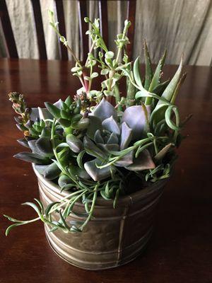 Succulent arrangement 🌱 for Sale in Gilbert, AZ