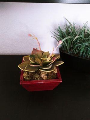 Fake succulent plant for Sale in Avondale, AZ
