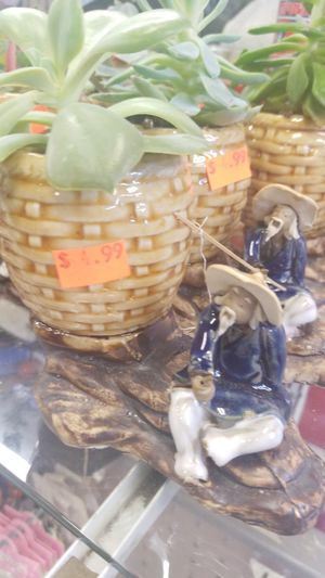 Succulent for Sale in Corona, CA