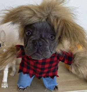 3 dog costumes (Size Small) viking / werewolf / taco for Sale in San Diego, CA