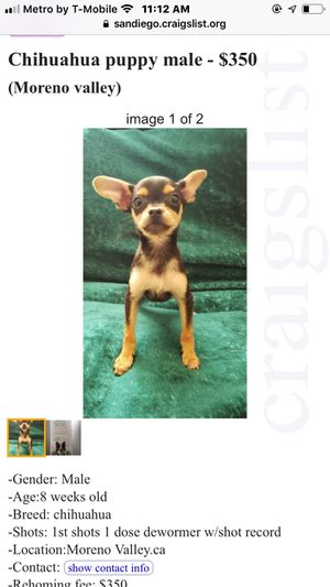 Puppy for Sale in Moreno Valley, CA