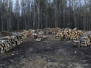 Wood for sale for Sale in Elkton, VA