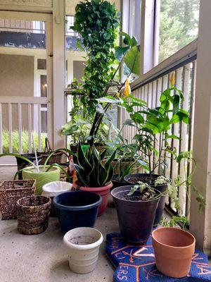 Plants, Pots, Baskets, Potting Soil for Sale in Atlanta, GA