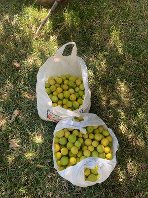 Lemons Read The Description for more info for Sale in Colton, CA