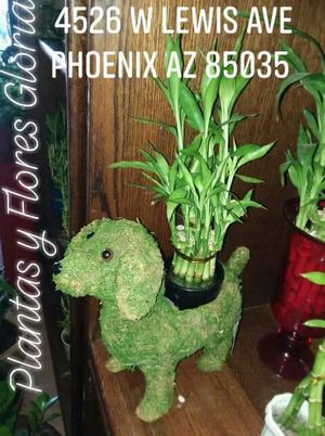 Bambú/natural decorative plant Bamboo for Sale in Phoenix, AZ