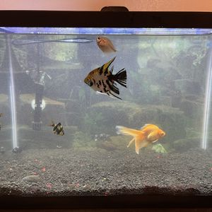 20 Gallon Tank With Fishes And Accessories for Sale in South Gate, CA