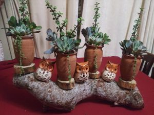 Succulents en bello tronco for Sale in Bell, CA