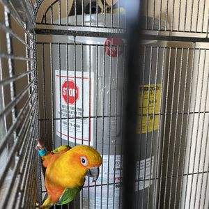 Sun Conure With Cage for Sale in Port Charlotte, FL