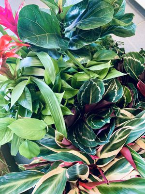Indoor plants and succulents for Sale in Acworth, GA