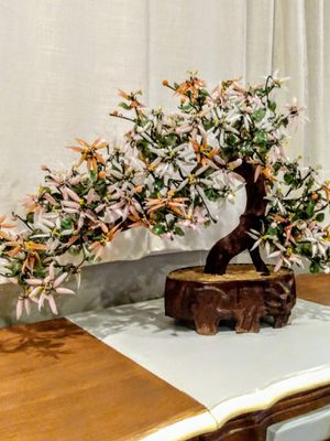 Jade bonsai tree for Sale in Puyallup, WA
