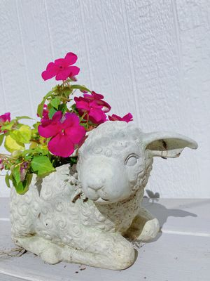 Impatience Flower in a Lamb Shaped Pot for Sale in Vancouver, WA