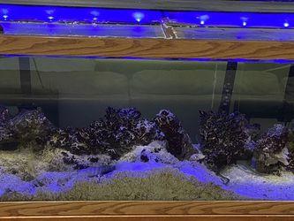 125 Gallon Salt Water Aquarium And Stand for Sale in Apollo Beach,  FL