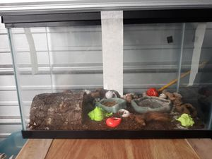 """Taraium or aquarium from Petco, 20""""X10.5""""X12""""H for Sale in Roanoke, VA"""