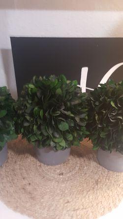 Faux Concrete Topiary Pots for Sale in Seattle,  WA