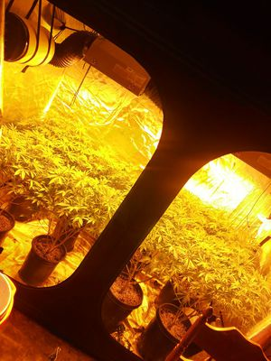 4x8 grow tent withe everything included for Sale in Cambridge, MA